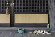 Aoshima, Ehime prefecture, September 4 2015 - Cat outside a shrine.<br /> Aoshima (Ao island) is one of the several « cat islands » in Japan. Due to the decreasing of its poluation, the island now host about 6 times more cats than residents.
