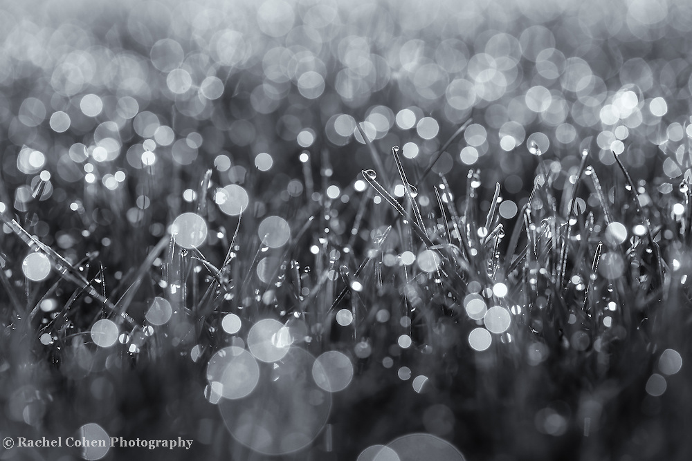 &quot;Refreshing&quot; mono<br />