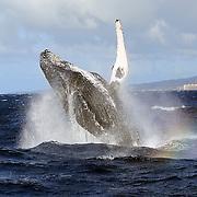 2010 Maui, Hawaii