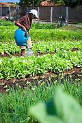 Sete Lagoas_MG, Brasil...Horta Comunitaria no Bairro Morro Vermelho. A horta é cuidada pelos proprios moradores da regiao em Sete Lagoas...Community vegetable garden in Morro Vermelho neighborhood. The vegetable garden is cared for by the residents own region in Sete Lagoas...Foto: JOAO MARCOS ROSA / NITRO