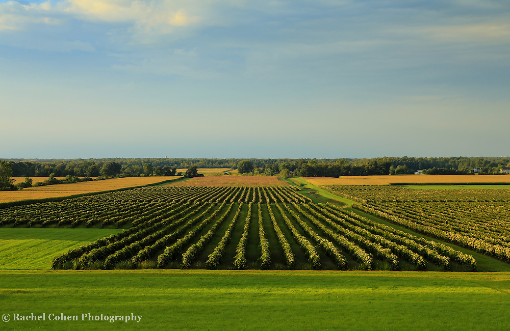&quot;Lewiston Summer Vineyards&quot;<br />