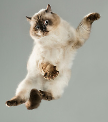 "German photographer, Julia Christe is at it again! This time she has the photographed the beautiful and hilarious 'Flying Cats' photo series. Christe created 'Flying Dogs' in 2007 and the second series of 'Flying Dogs' in 2011 and it was so successful, that 'Flying Cats' has been the next project, with the book having only been released three weeks ago. <br /> <br /> Christe enjoys photographing dogs and cats because she loves that they have such a variety of expressions at their disposal. ""I enjoy this particular work, especially when they express joy and happiness. Sometimes it's also just downright funny"" says Christe.<br /> <br /> Christe hopes that people will find the series as fun as she does and that it shows some insight into how cats come in so many shapes and different characters. <br /> <br /> However, while the majority of feedback has been overwhelmingly positive, some has been quite critical. ""Some people thought we had used a trampoline or thrown the cats from a great height or even tortured them somehow. None of that is true! The cats are dropped from a very small height onto a foam mat. There is a making of the film which shows the photo shoot"" says Christe. <br /> <br /> Flying Dogs was published by Simon&Schuster in 2016 and Heyne Verlag in 2017 and Flying Cats has been published by Knesebeck just weeks ago.<br /> <br />  <br /> <br /> Name:<br /> Julia Christe<br /> <br /> Age:<br /> 45<br /> <br /> From:<br /> Born in Tettnang, used to live in Berlin, still like to work in the studios of Berlin, live on the countryside in Wiendorf, close to the Baltic Sea.<br /> <br /> Location of shoot:<br /> Berlin and Frankfurt/Main in the studios<br /> <br /> Date of shoot:<br /> Date of shoots between 12/2016 and 2/2018, book published 2018"