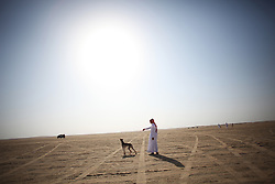 "Many dogs are considered ""ritually unclean"" by some Islamic scholars, but not Salukis in the Gulf. ""It's part of our culture,"" said one owner."