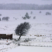 Perth A9 snow...6.2.2001.<br />