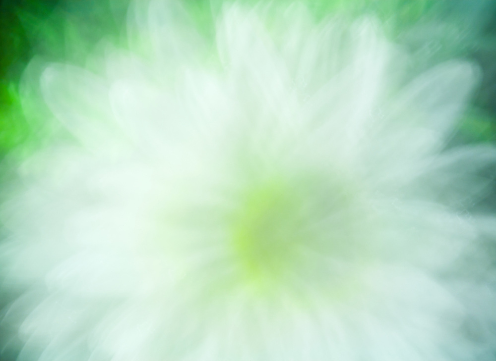 Motion blur of a daisy flower.