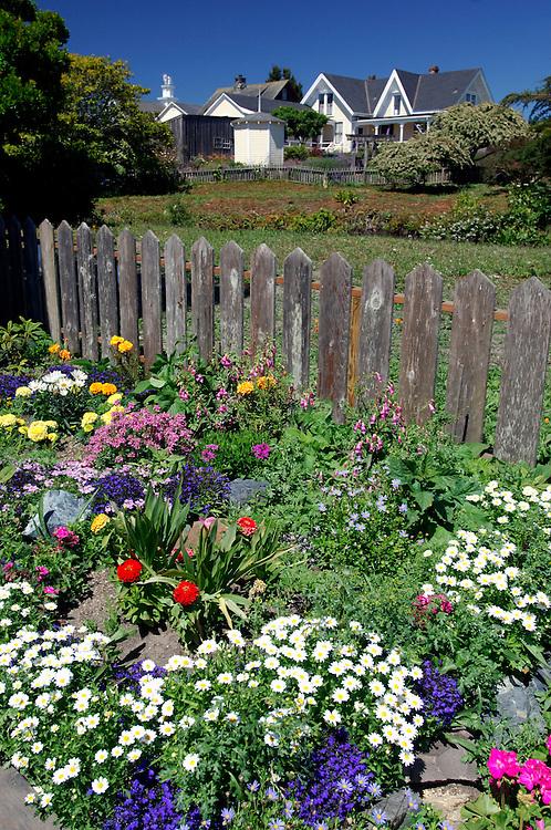 Flowers, Mendocino, California, United States of America