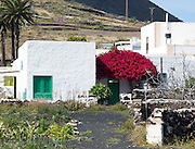 Whitewashed houses, red bougainvillea plant flowering, village of Maguez, Lanzarote, Canary Islands, Spain