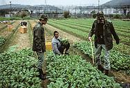 Hong Kong. police checking the Chinese peasants along the border     / Le capitaine de police Ashmore  faisant son inspection dans le No man's land entre  et la Chine. Le paysan qui est en train d récolter ses légumes vient de la Chine communiste. Des passages sont aménagés dans les lignes de défense pour permettre le passage quotidien  des paysans qui traversent la frontière dans les deux sens pour cultiver leur lopin de terre.  / R00057/104    L940302a  /  P0000290
