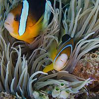Sealife - Philippines