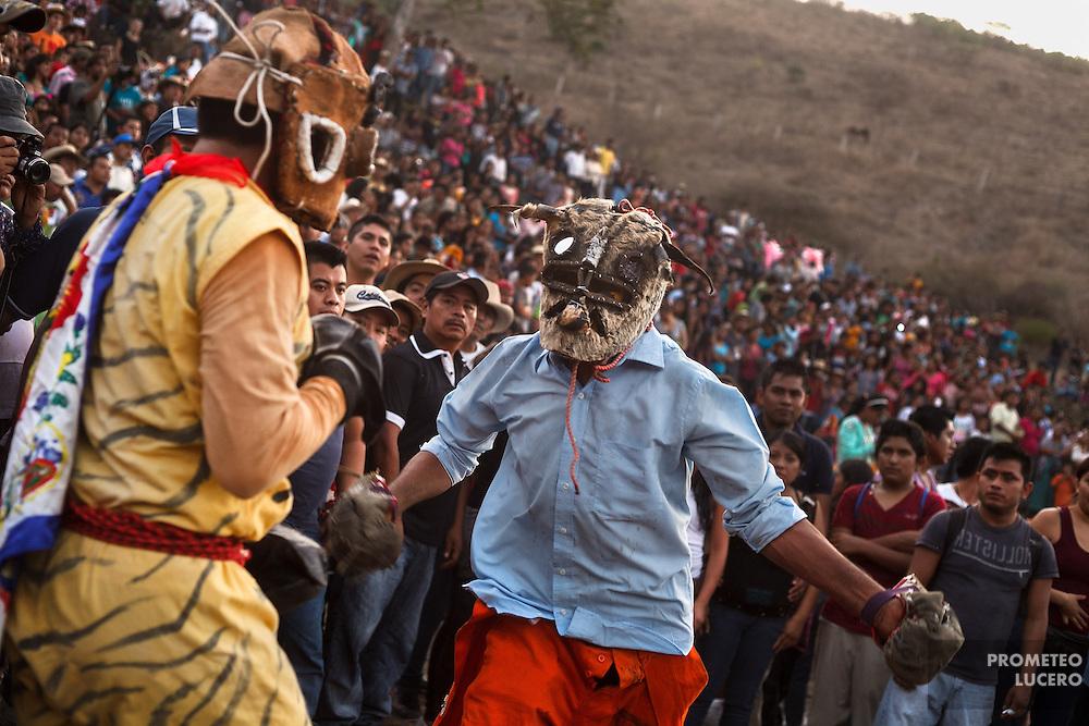 Tigres pelean en un cerro cercano a Acatl&aacute;n, mientras son rodeados por una multitud de espectadores.<br /> <br /> Cada a&ntilde;o, Ind&iacute;genas nahuas de Acatl&aacute;n, municipio de Chilapa, Guerrero, protagonizan en las alturas del Corozco o &quot;Lugar de las Cruces&quot;, la Pelea de Tigres para atraer la lluvia y mejorar las cosechas. En el batimiento participan hombres, pero tambi&eacute;n mujeres y ni&ntilde;os. La creencia es que mientras m&aacute;s peleas haya, mejores lluvias habr&aacute; para el campo. (Foto: Prometeo Lucero)