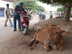 Roadside scene with cow and scooter, Mysore