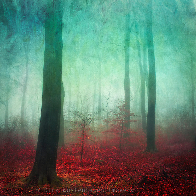 Painterly forest scenery on a misty Nove,ber day.