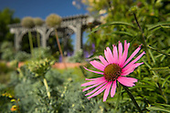 20140617 Summer Gardens