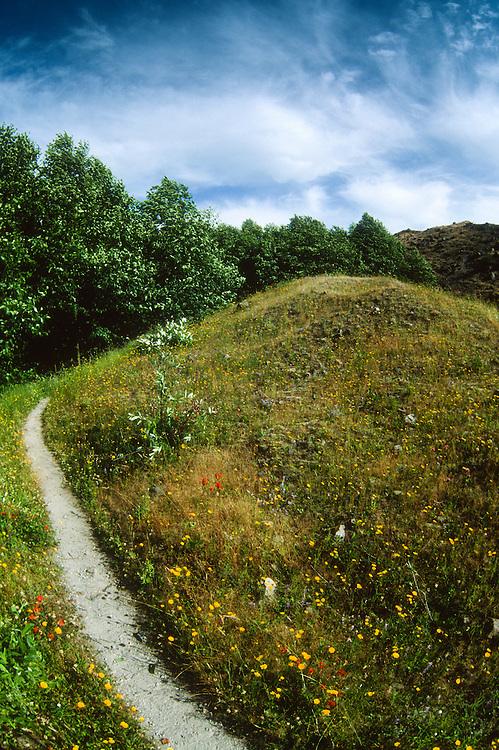 Wildflowers off Hummocks Trail, Mt. St. Helens National Volcanic Monument, Washington, US
