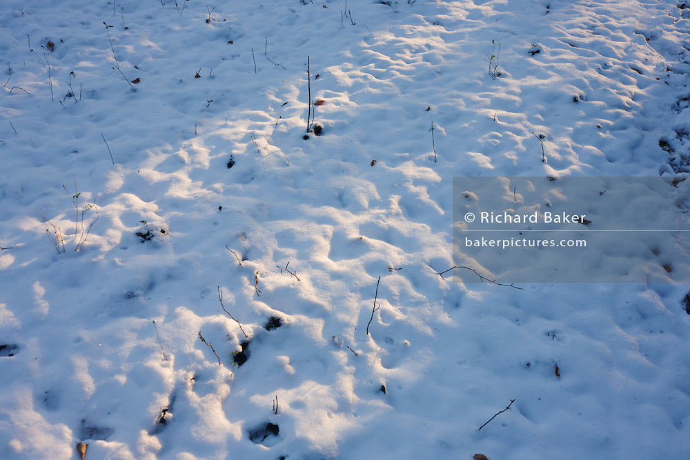 Low sunlight shines across frozen snows in English woodland.