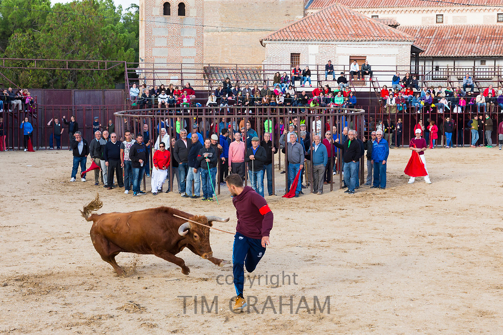 Local people challenging bull during traditional festival at Madrigal de los Altas Torres in province of Avila, Spain