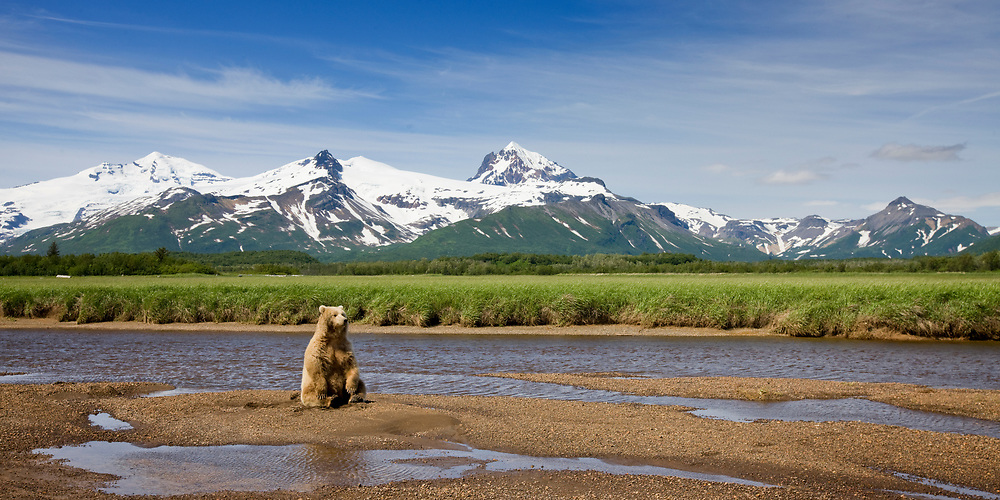 USA, Alaska, Katmai National Park, Brown Bear (Ursus arctos) sitting in river bed along Hallo Bay