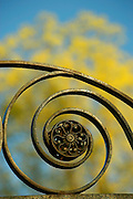 Decorative metal swirl or flourish on gate.