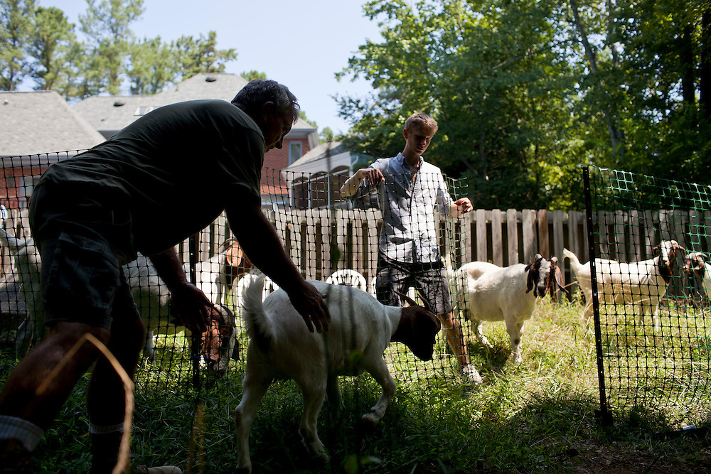 Farmer Jeff Mullins, left, herds a goat back toward Rent-A-Goat Owner Matthew Richmond, right, as he holds onto a temporary fence erected to keep the goats contained and grazing while they clear a lot-side easement behind a home in Chapel Hill, N.C., Thurs., July 22, 2010...D.L. Anderson for The Wall Street Journal..GOATS