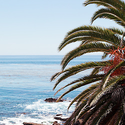 Photo of palm tree and Pacific Ocean in Laguna Beach in Orange County Southern California. Has vertical orientation with copy space for text.