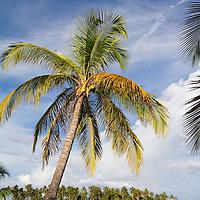 Beach. San Blas, Panama