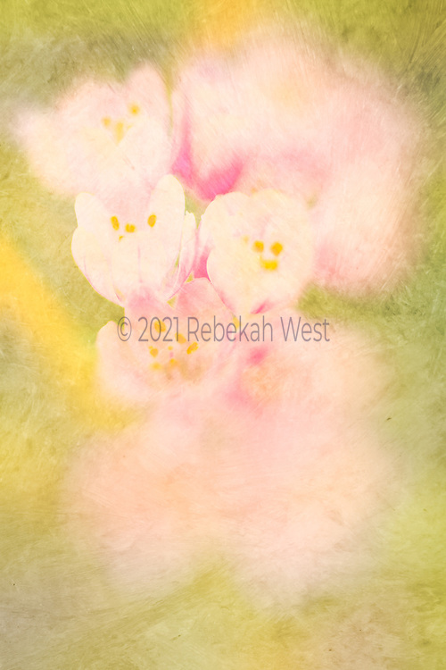 Trio of cream and pink blossoms in focus in vertical stack of blurred blossom blobs, sits center in vertical field of chartreuse and yellow greens, magenta accents, flower art, feminine, millennial pink, high resolution, licensing, 2632 x 3949