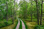 Driveway with Rhododendron, Deerfield Rd, Sag Harbor, NY