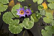 Die Pflanzen der Bibel in der Botanischer Garten