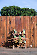 wooden fence in the backyard of a private house with little cactus plants