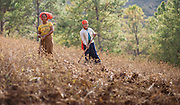Women working on the fields in Myanmar