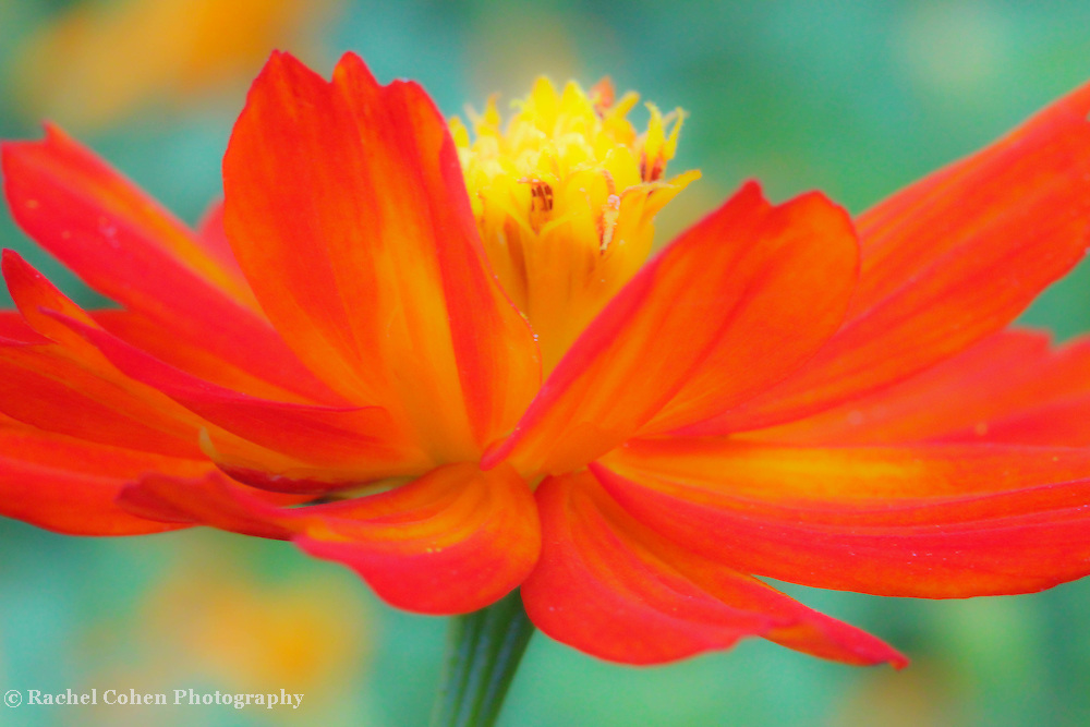 &quot;Whirl Wind&quot;<br />