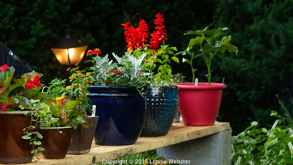 2015 Watauga Democratic Party Plant Sale