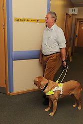 Patient with guide dog in corridor of eye clinic at QMC hospital, Nottingham.