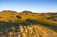 Rolling hills of the Bears Paw Mountains in summer in Blaine County, Montana, USA