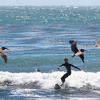 Surfers flock to the breaks off of 38th Avenue at the Hook Friday afternoon. <br />Photo by Shmuel Thaler/Santa Cruz Sentinel