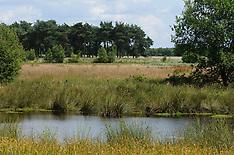 Regte Heide, Brabants Landschap, Goirle, Noord Brabant, Netherlands