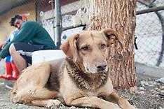 Tra i treni con Canela, il cane migrante.