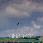 Electrical generating wind turbines in wind farms on the top of thewindy English Pennine Hills in Britain. A bird is shown flying in the constant breeze at the location.