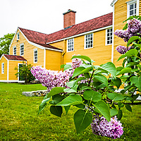 Lilacs in Bloom at the Wentworth Coolidge Mansion, Portsmouth, New Hampshire.  <br /> All Content is Copyright of Kathie Fife Photography. Downloading, copying and using images without permission is a violation of Copyright.