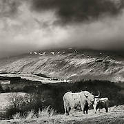 Mother and child, loch Awe