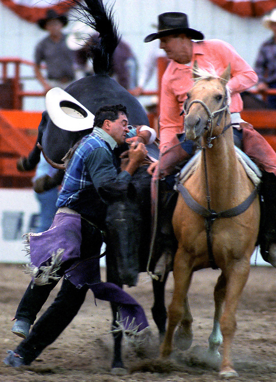 Cowboy gets hung up in the rigging as he finishes his bronc ride