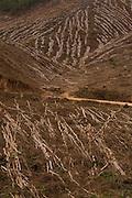 Alvinopolis_MG, Brasil...Corte da plantacao de eucaliptos em Alvinopolis, Minas Gerais...Cut of eucalyptus plantation in Alvinopolis, Minas Gerais...Foto: LEO DRUMOND / NITRO