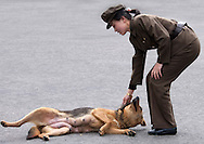 Pyongyang, North Korea. A female soldier candling a dog on the street.<br /> -Look there Mr Eric! That dog acts like Americans: it lies down in front of North Korea!