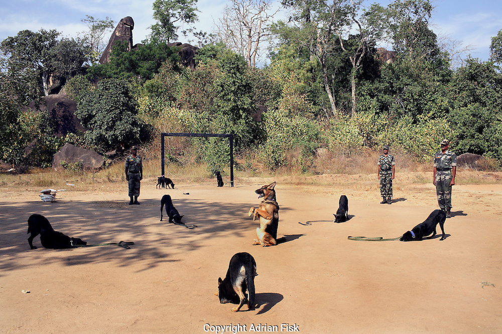 The jungle warfare training college in central Chhattisgarh was specifically set up to train police to combat Naxalism (underground maoist guerillas). Policemen aged anywhere between 18 and 60 attend the six week course where they learn everything from catching snakes for food to shooting whilst riding a horse..In its first three years over 6000 policemen have passed the six week course..(pictured) Trained dogs from the college show off their skills. Along with Alsations, street dogs are also used with tails that have been docked. The dogs used for everything from tracking Naxalites to explosive searches..