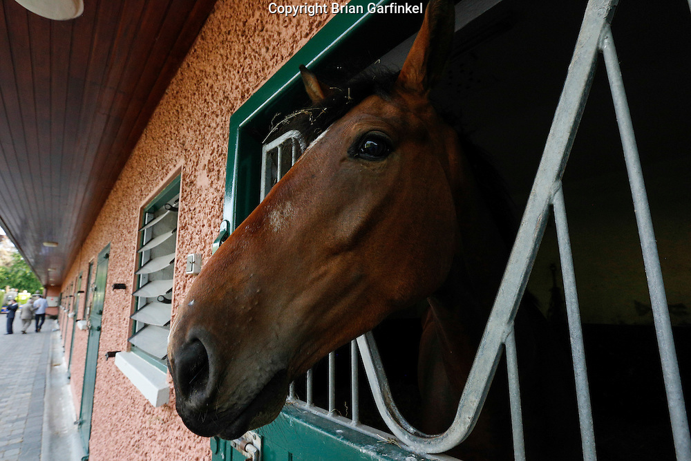 A horse in a stable at Ardenode Stud, County Kildare, Ireland on Sunday, June 23rd 2013. (Photo by Brian Garfinkel)