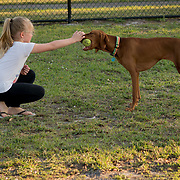 ROYAL PALM BEACH, FLORIDA, MARCH 15, 2017<br /> Cynthia Greaux's daughter  a Chloe, 8, pets a neighbor's dog in the park a short walk from their house. Greaux is able to use vouchers to pay for her daughter's and son's enrollment at a private school that specializes in educating children with dyslexia.<br /> (Photo by Angel Valentin/Freelance)
