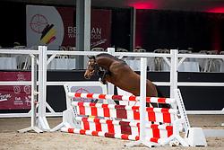 004, Panter<br /> Brp Keuring - Stal Hulsterlo - Meerdonk 2016<br /> © Hippo Foto - Dirk Caremans<br /> 17/03/16