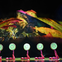 Cirque du Soleil: Ovo, a insect themed performance at the Denny Sanford Premier Center on Wed., Jan. 4, 2017. The show is a a circus of acrobats, gymnasts and dancers. Cirque Du Soleil is a 32-year-old French Canadian theatrical production company.
