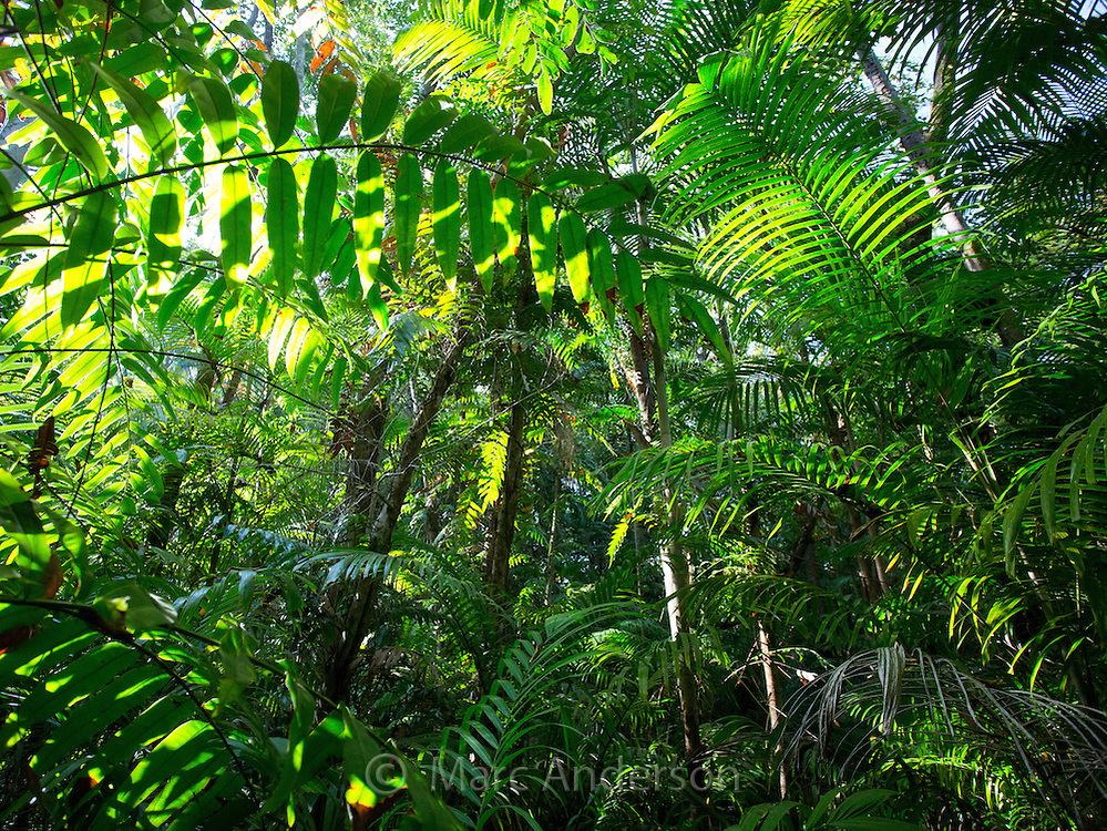 Palms and lush vegetation in tropical monsoon forest, Fogg Dam Conservation Area, Northern Territory, Australia