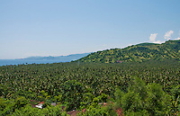 Looking out over the coconut forest and the bay at Candidasa from Sameh Village, Bali, Indonesia